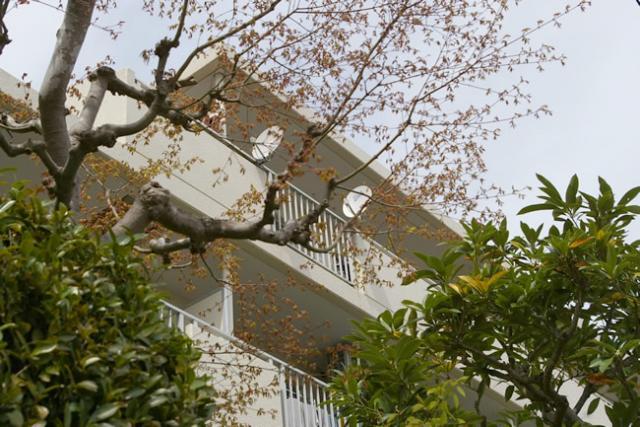 ◆七里ガ浜の海と緑を感じるマンション