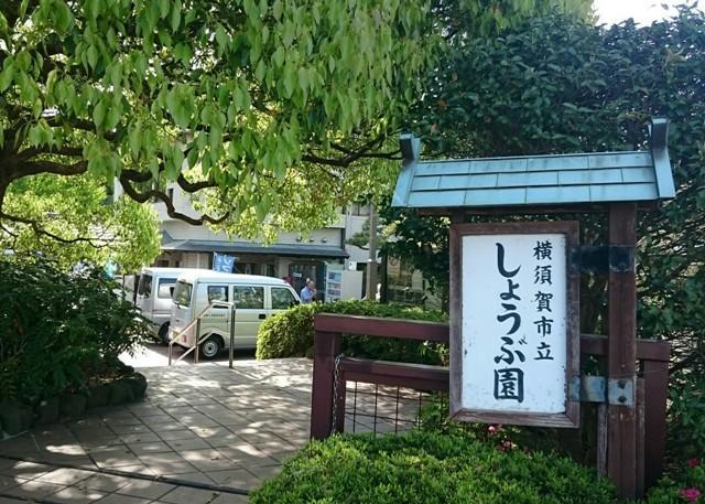 横須賀しょうぶ園(29.5.1)