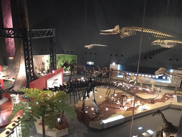 地球博物館(29.11.20)
